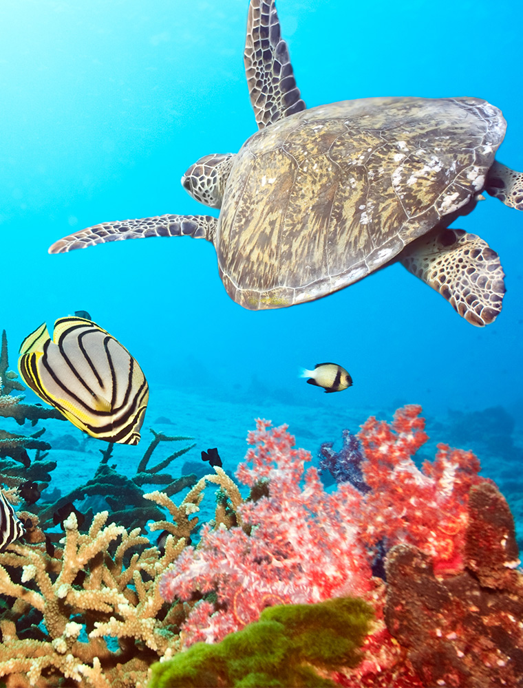Image d'illustration de Atoll de Malé Nord
