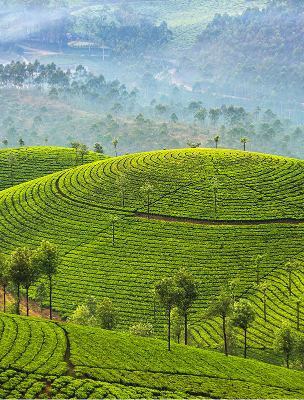 Image d'illustration de Kandy – Hautes terres
