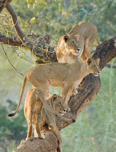 Image d'illustration de Parc Kruger