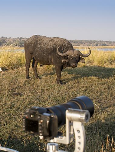 Image d'illustration de Parc national de Chobe