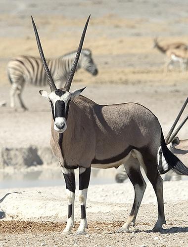 Image d'illustration de Parc National d'Etosha