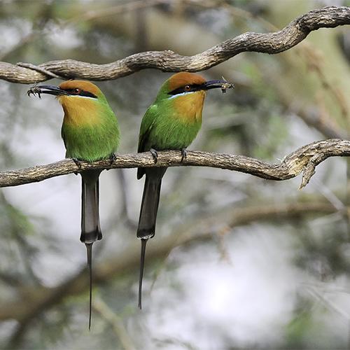 Image d'illustration de Parc National Liwonde