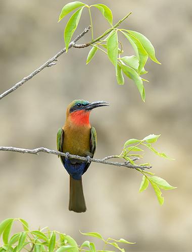 Image d'illustration de Parc National Murchinson Falls