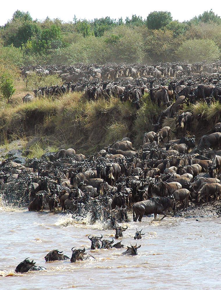 Image d'illustration de Réserve Nationale de Masaï Mara