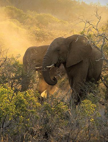 Image d'illustration de Réserve privée de Thanda