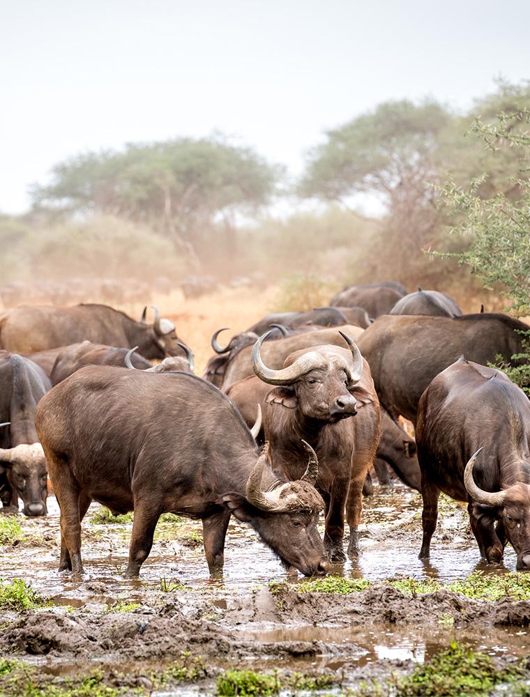 Image d'illustration de Réserve privée de Malilangwe